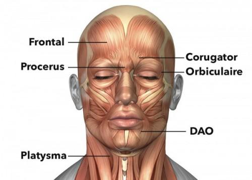 Le thym dans la cosmétologie pour la personne